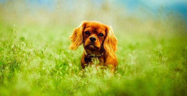 dog liability insurance quotes